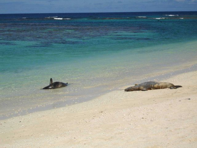 Laysan Island Picture