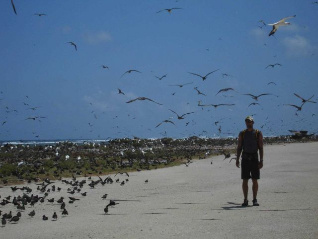 A different species shows up amidst the sea birds of Tern Island. Picture