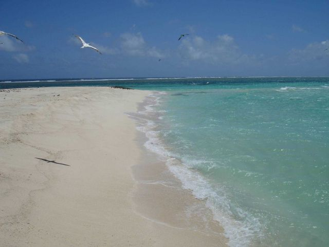 White sands, emerald seas, and graceful birds Picture