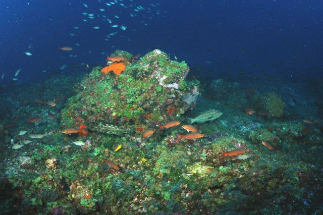 Deepwater habitat at Bright Bank with creole fish, grouper, Spanish hogfish, and brown chromis swimming about. Picture