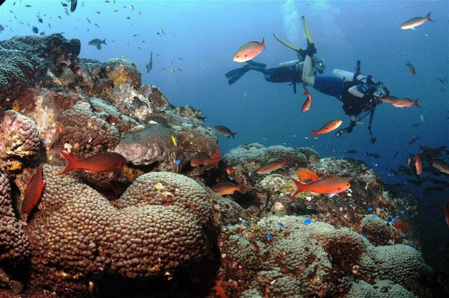 Divers on a rich reef environment including creolefish (Paranthias furcifer) and blue chromis (Chromis cyanea). Picture