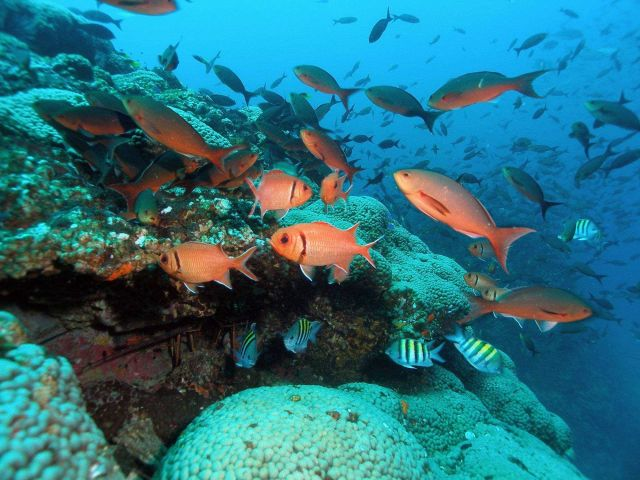 Creolefish (Paranthias furcifer), blackbar soldierfish (Myripristis jacobus), and sergeant major (Abudefduf saxatilis). Picture