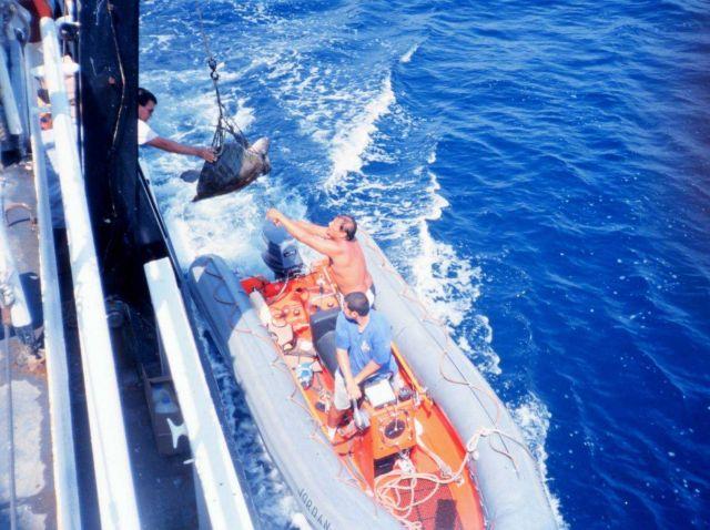 Launch alongside NOAA Ship DAVID STARR JORDAN passing marine turtle aboard for Picture