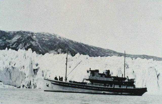 BROWN BEAR in front of Taku Glacier, Alaska. Picture