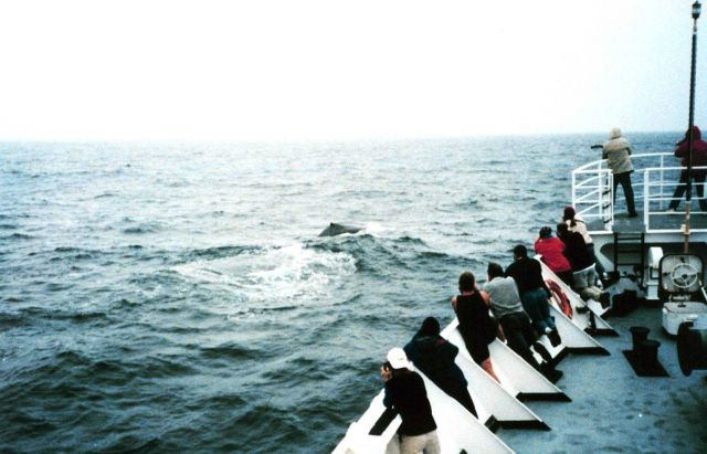 Observing humpback whales from the bow of the NOAA Ship McARTHUR during Stenella Abundance research cruise. Picture