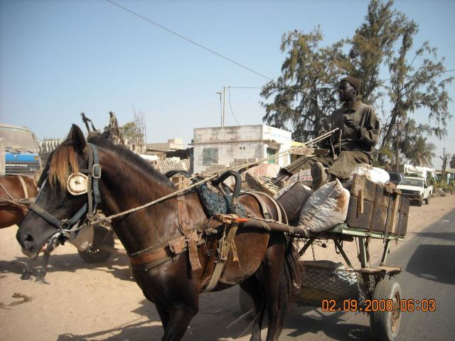 Horse cart on the streets of Dakar. Picture