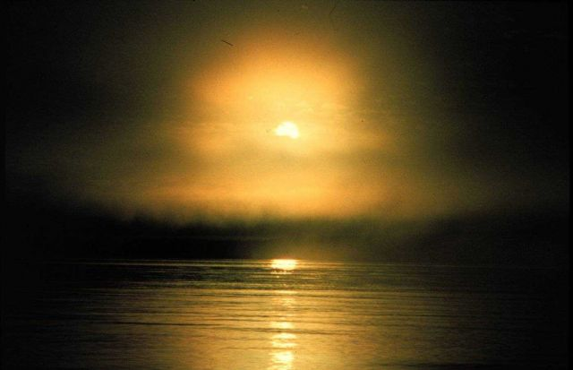 Sun rising through the fog on the Mendocino coastline Picture
