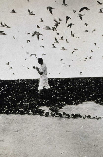 No shortage of birds. Picture