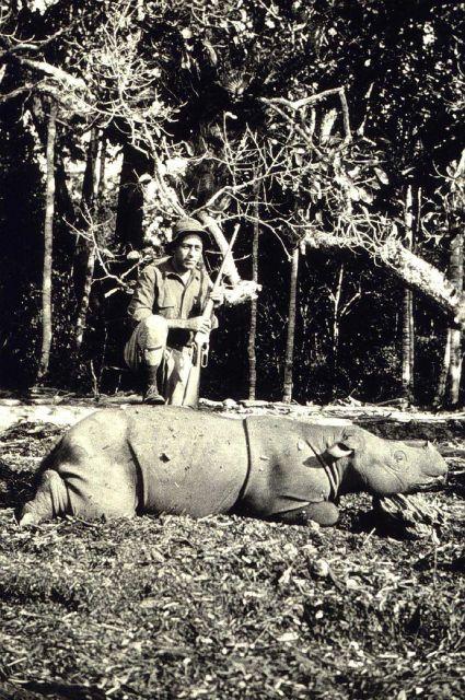 Rhino hunting in Borneo Picture