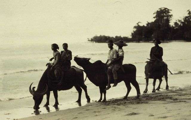 Native children riding water buffalo. Picture