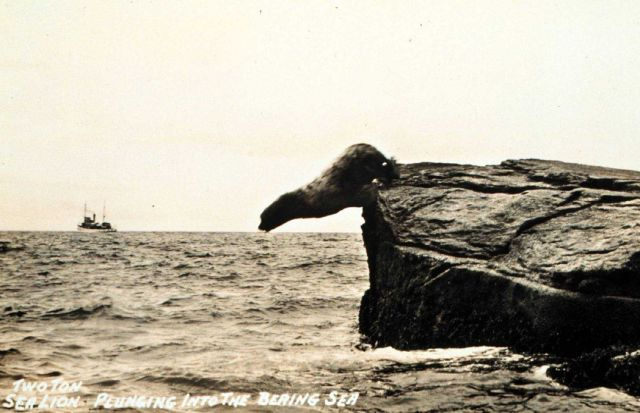 Airborne sealion at Amlia Island. Picture