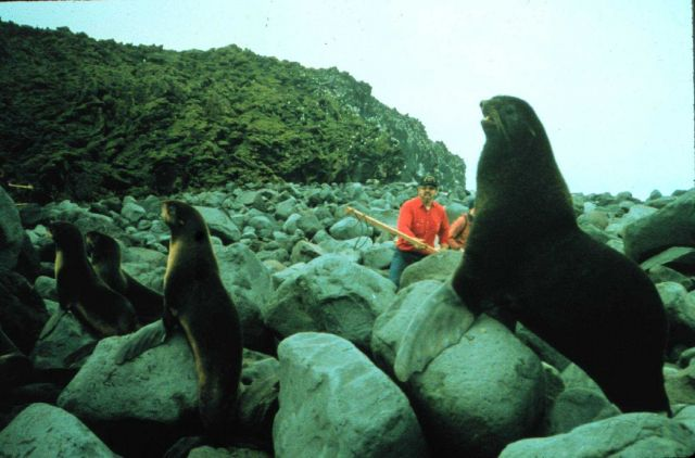 How do you lasso a bull sea lion? Very carefully! Personnel off the MILLER FREEMAN. Picture