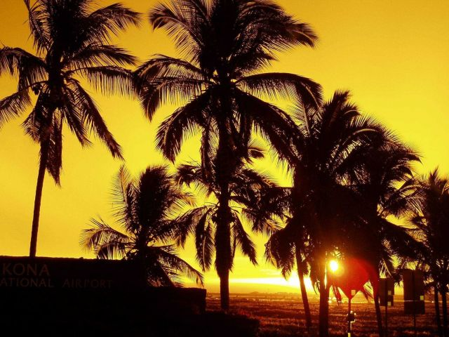 Sunset with palm trees. Picture