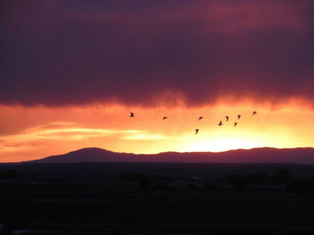 Seagulls ? or perhaps some more appropriate Wyoming birds at sunset. Picture