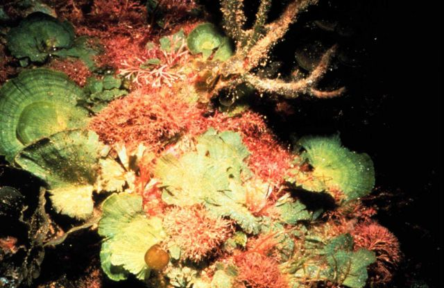 Green, red and brown algae vary seasonally and differ in role as fish food. Picture