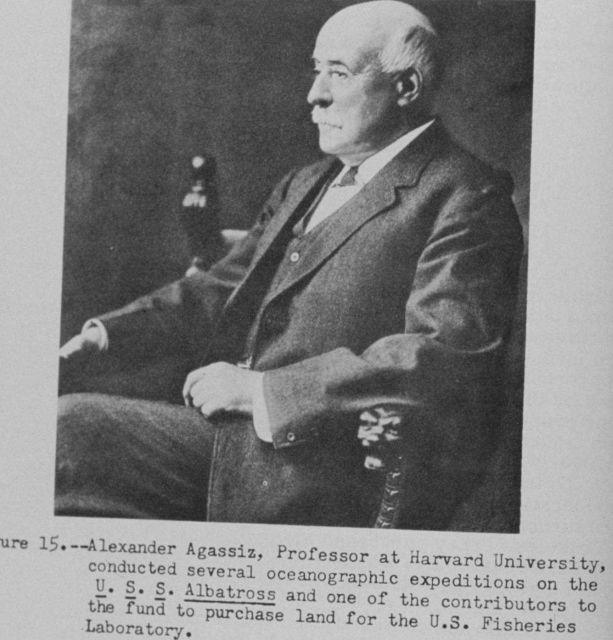 Alexander Agassiz, Professor at Harvard University, (1835 - 1910) conducted several oceanographic expeditions on the U.S.S Picture