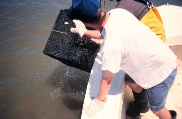 Chris Doley, of NOAA, hauls an experimental crab pot from the water at a sampling site Picture