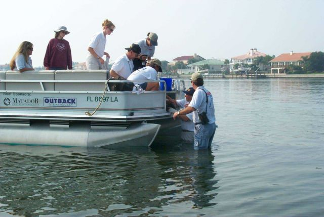 Volunteers rush to bring an injured bird to the boat that will transport the pelican to wildlife rehabilitators who will attempt to resuscitate the bi Picture