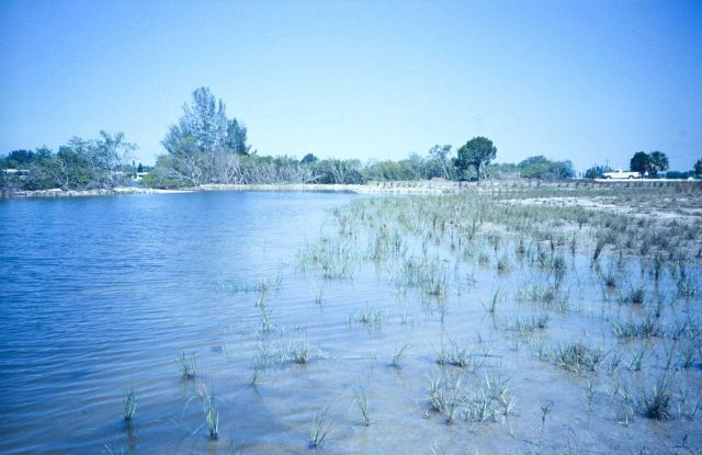 A site restored by the SW Florida Water Management District and planted by the Tampa Bay Wetland High School Nursery Program Picture