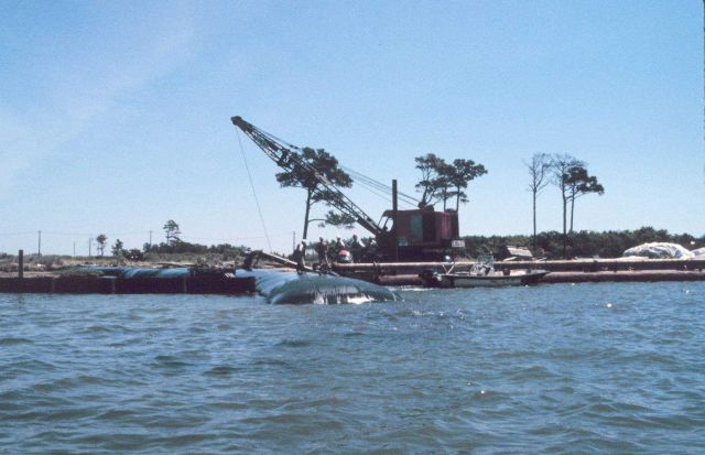 Geotubes being filled at Barren Island Picture