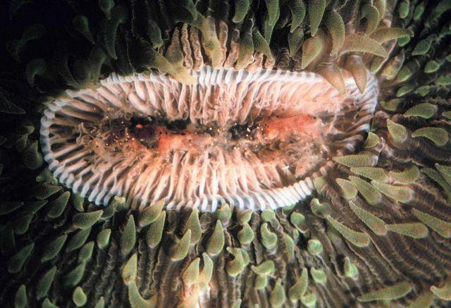 Sea anemone Picture
