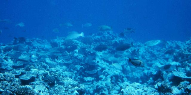 Reef scene with parrrotfish and surgeonfish Picture