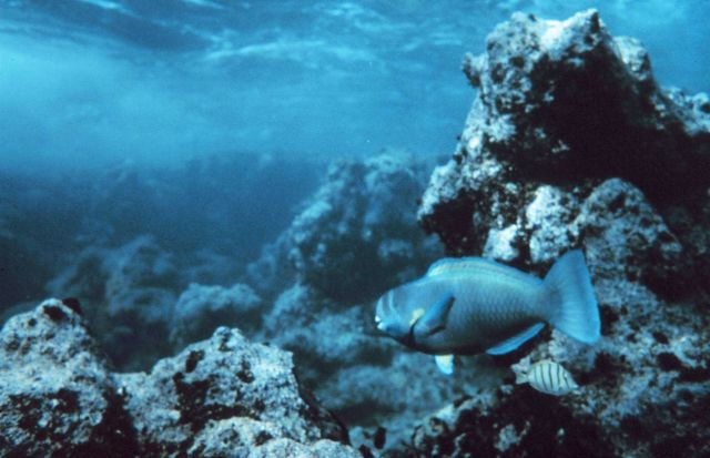 Reef fish and coral rock Picture
