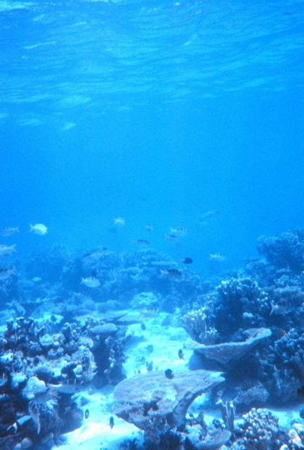 Reef fish and coral Picture