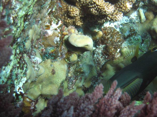 Can you find the fish in this reef scene? Picture