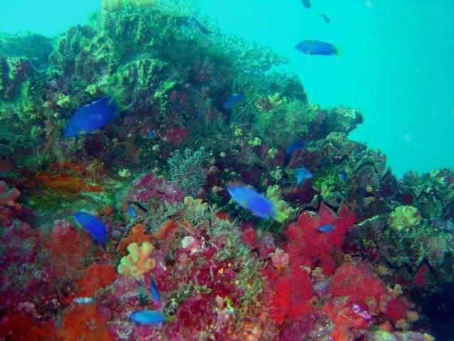 Coral and fish on Fujikawa Maru. Picture