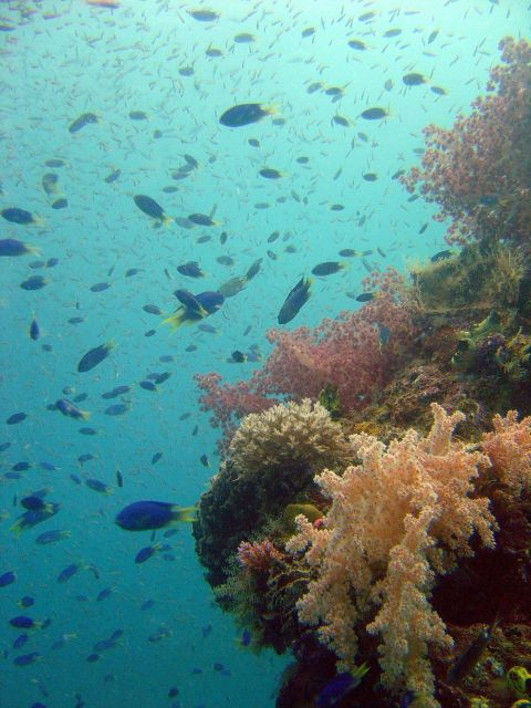 Coral growth and damselfish on Shinkoku Maru. Picture