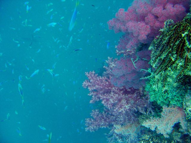 Coral growth and fish on mast of Shinkoku Maru. Picture