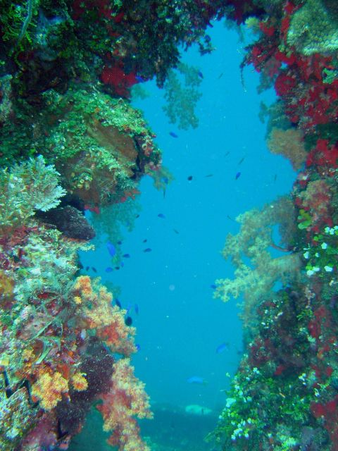 Coral growth and fish seen near blast hole through hull of Sankisan Maru. Picture