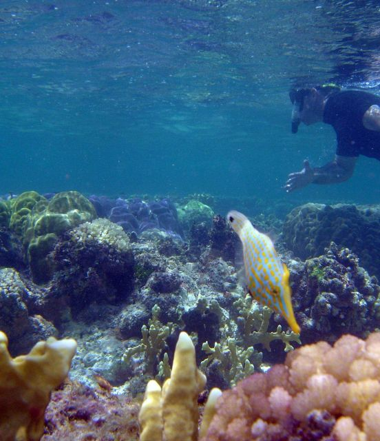 Longnose filefish (Oxymonacanthus longirostris) Picture