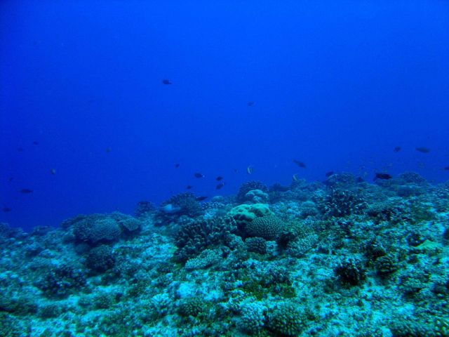 Reef scene with a variety of reef fish Picture