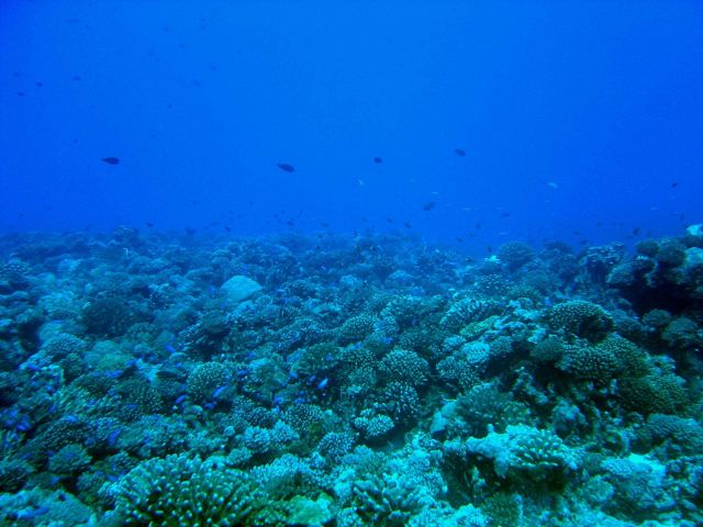 Reef scene with numerous reef fish Picture