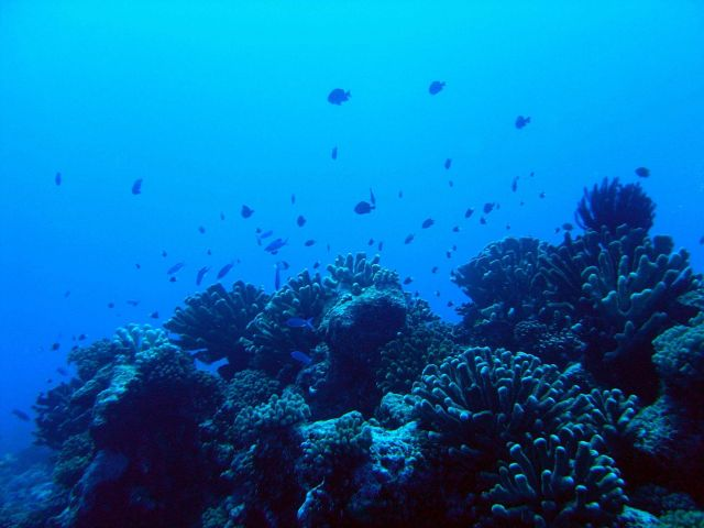 Reef scene with reef fish Picture