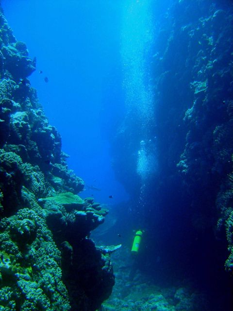 Diver between vertical walls on coral reef with shark cruising in the distance. Picture