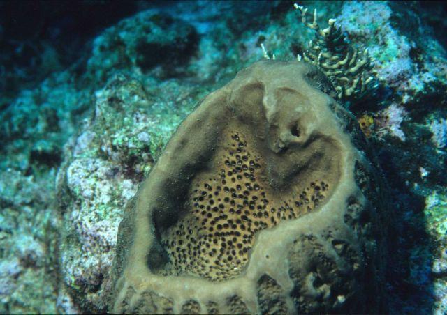 Sponge Picture