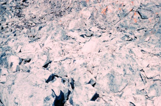 Look hard and you will find a baby giant petrel camouflaged in the rocks Picture