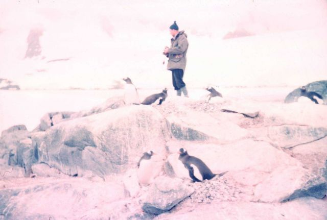 Among the penguins at Port Lockroy Picture