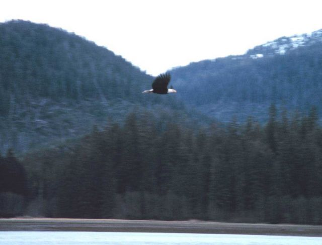 Eagle in St Picture