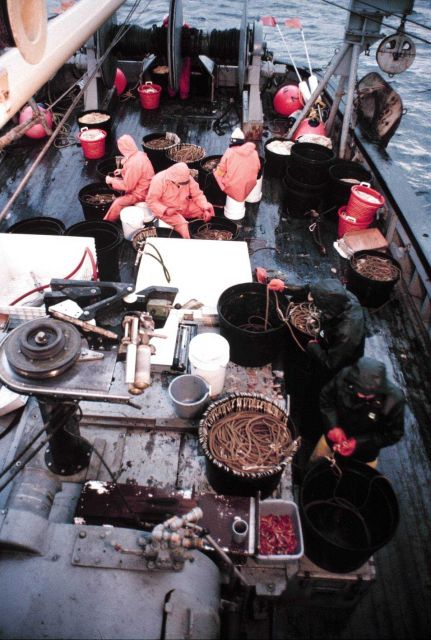 Sablefish longline operations - lines 3/4 miles long with hooks every 15 to 20 feet. Picture