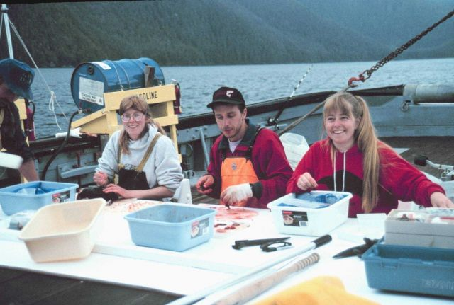 Scientists sorting salmon specimens for genetic research Picture