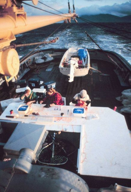 Scientists sorting specimens of salmon material for joint U.S./Canada genetic research project. Picture