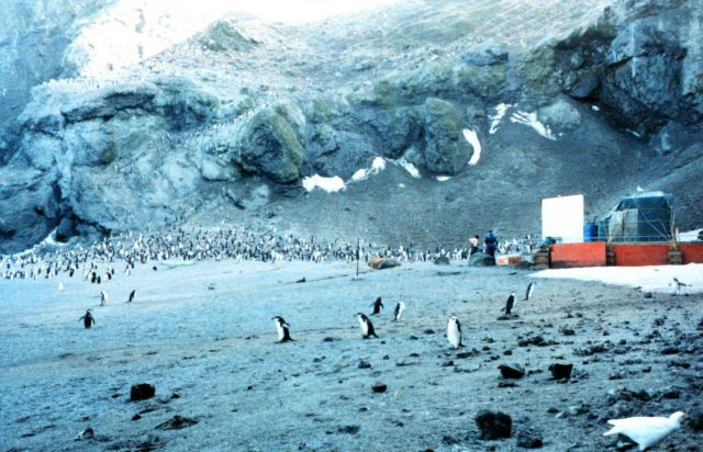 The Seal Island Penguin Observation Post. Picture