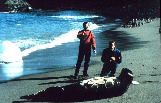 Leopard seal; Lieutenants Rich Behn and Dave Neander gingerly approach large leopard seal. Picture
