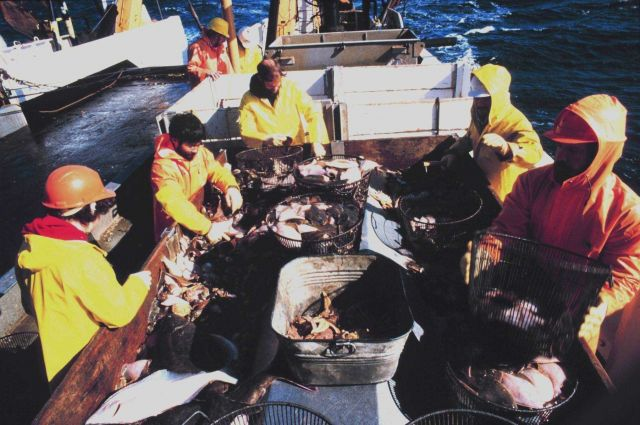 Scientists sorting fish on the MILLER FREEMAN. Picture