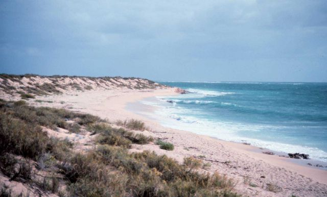 A busy Northwest Cape beach looking southwest towards the Indian Ocean. Picture