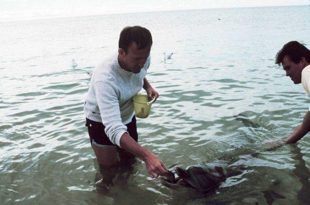 Commander Bill O'Clock feeding the dolphin at Monkey Mia near Shark Bay. Picture